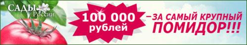 интернет-магазин Сады России. Огромный выбор посадочного материала