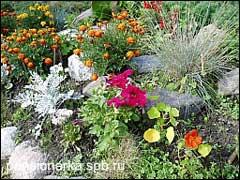 Фрагмент альпинария с однолетними растениями