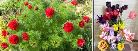 Первые цветы весны в апреле