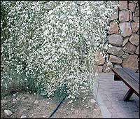 http://www.gardenia.ru/pages/i/bibl0014.jpg
