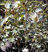 http://www.gardenia.ru/pages/i/bibl0015.jpg