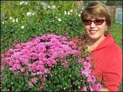 Подготовка хризантем к зиме и способы зимовки