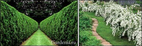 формованная живая изгородь; свободнорастущая живая изгородь