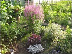 дикорастущие в саду