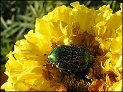 вредители жрут цветы