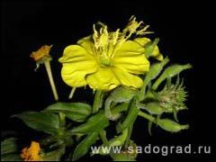 Цветок который цветёт в мае