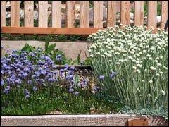 Почвопокровники в саду: шаровница, глобулярия