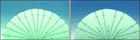 обрезка гортензии: Шаг1_1 + Шаг1_2