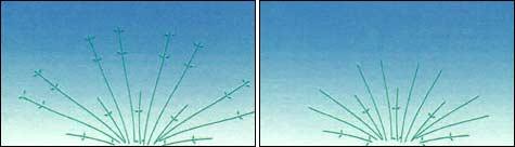 обрезка гортензии: Шаг2_1 + Шаг2_2