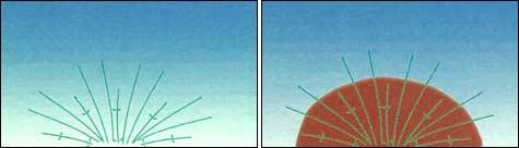 обрезка гортензии: Шаг3_1 + Шаг3_2
