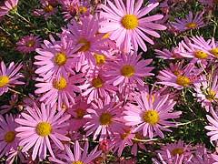 http://www.gardenia.ru/pages/i/hriz003.jpg