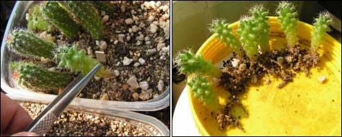 Почвы удобрение почвы осенью