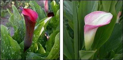 бисероплетение схемы цветов орхидея