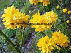 Цветок с зелёно жёлтыми листьями