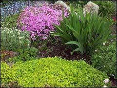 Удовольствием выращивают в своём саду
