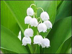 http://www.gardenia.ru/pages/i/land002.jpg