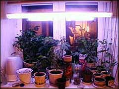 Свет для растений Light001