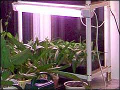 Свет для растений Light003