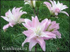 Домашние цветы с удлиненными листьями фото