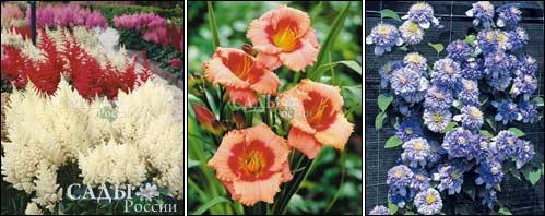 Всё о комнатных и садовых растениях