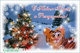Новогодние и Рождественские поздравления 2009-2010