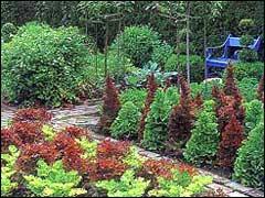 Клумбы из огородных растений
