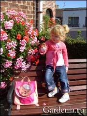 пеларгония в садовом вазоне