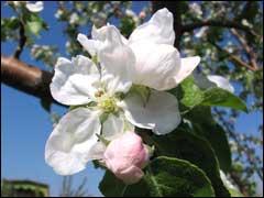 Сада идеи цветы азалии как ухаживать