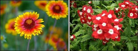 Опыт посева цветов в декабре
