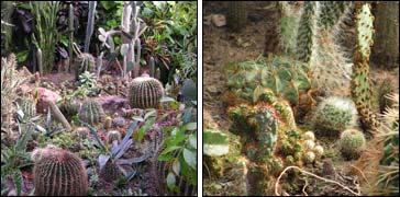 Амурский Ботанический сад отписка
