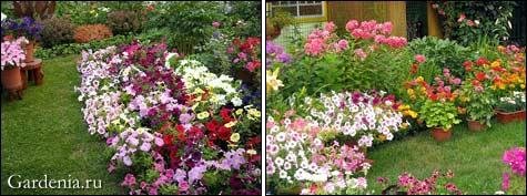 Кустарник-многолетник для вашего сада