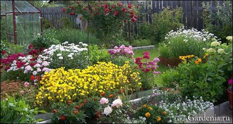 Красивый сад из цветов фото