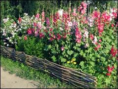 Мотивы стиля кантри, или «деревенский» сад