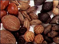 семена древесных пород