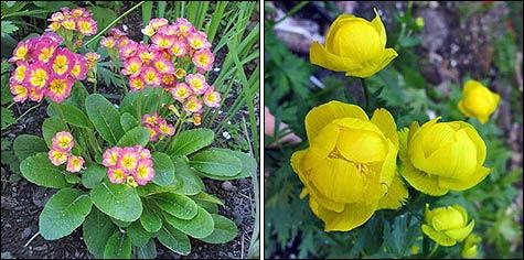 Стратификация семян: сущность и способы проведения