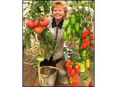 томаты в вёдрах