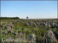 пейзаж лесотундровой зоны