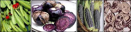 Семена тыквы Атлантик Гигант (Dill Atlantic Giant) - goodroot ru