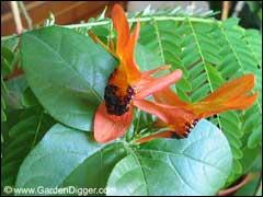 http://www.gardenia.ru/pages/i/uhodkomn004.jpg