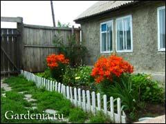 Комнатные растения в палисаднике