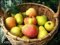 здоровые плоды